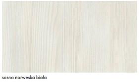 sosna norweska biała